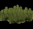 Seagrass (Tigress)