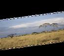 Backdrops (The CRG Problem)