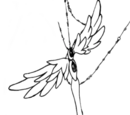Agate Links