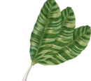 Palm Pikmin