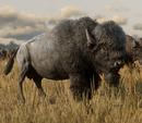 Bisonte americano (RDRII).png