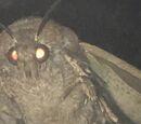 Lamp Moth