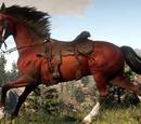 Immagini di cavalli