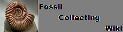 Fossil Collecting Wiki